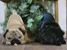 Two Cute Pugs